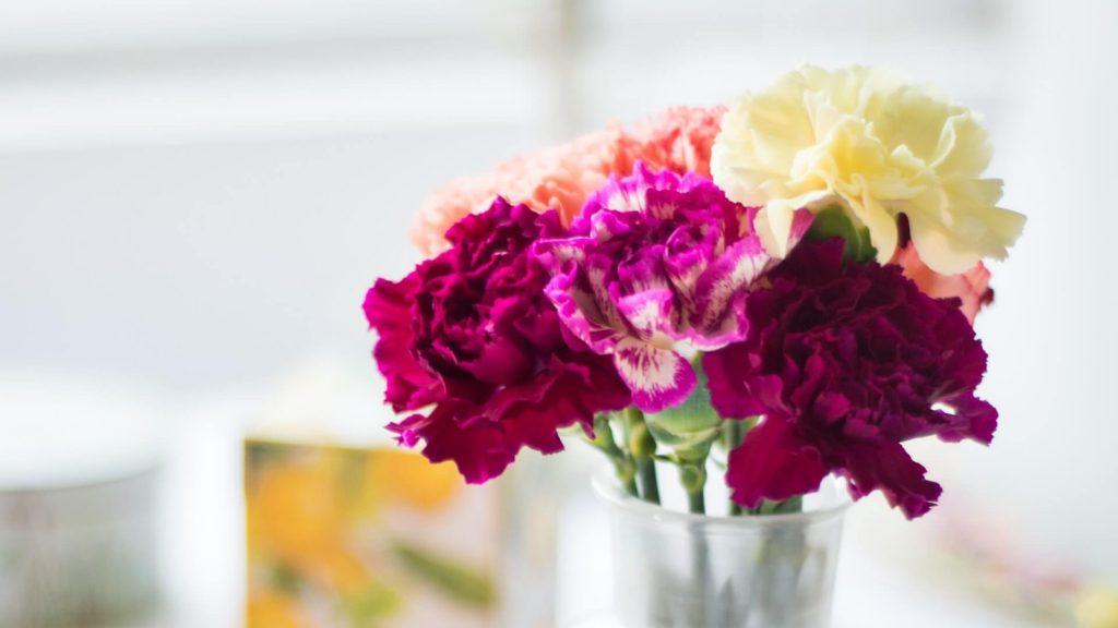 Freundin überraschen mit Blumen Nelke